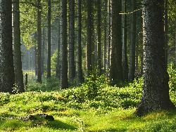 Жилой комплекс «Сказочный лес» от 2,7 млн руб. ЖК около м. Бабушкинская и МЦК